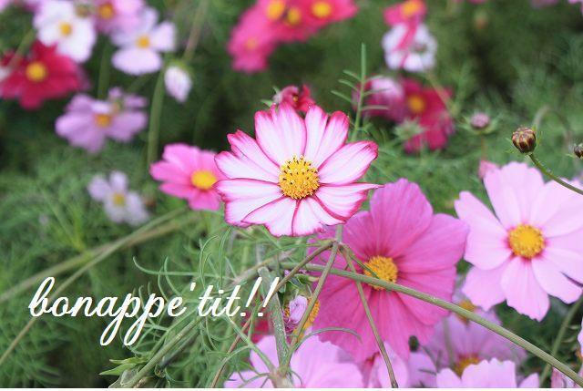 秋桜畑を楽しむ。_c0127029_16582170.jpg