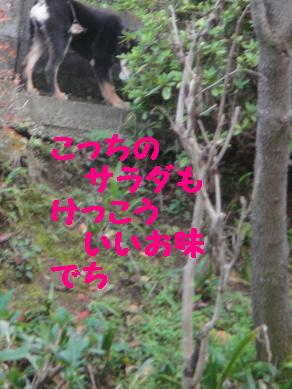 c0211642_20431537.jpg