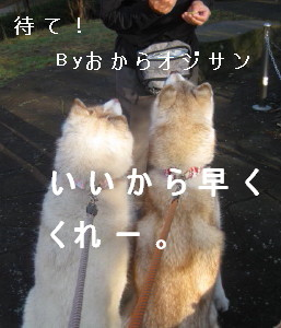 e0121548_1446916.jpg
