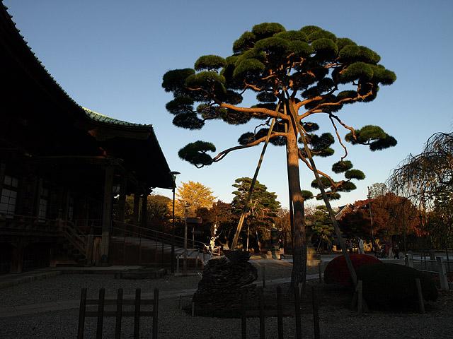 上野公園 ~ 護国寺 (11/21)_b0006870_20195383.jpg