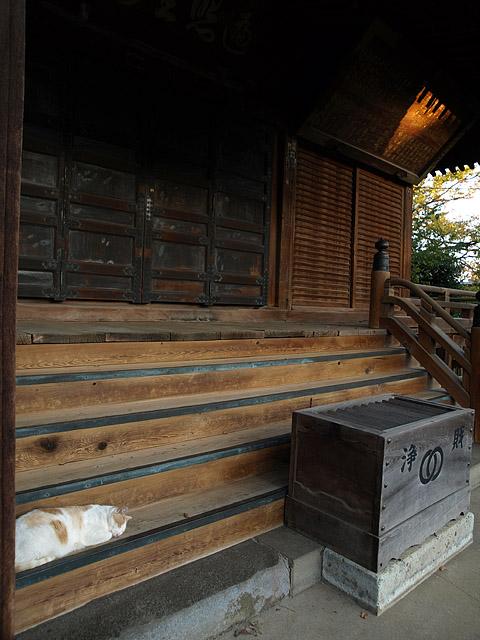 上野公園 ~ 護国寺 (11/21)_b0006870_20205055.jpg