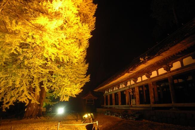 長床大イチョウのライトアップ@喜多方市新宮熊野神社。_c0141989_2301123.jpg
