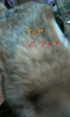 ハナちゃんとお揃い_c0225410_084313.jpg