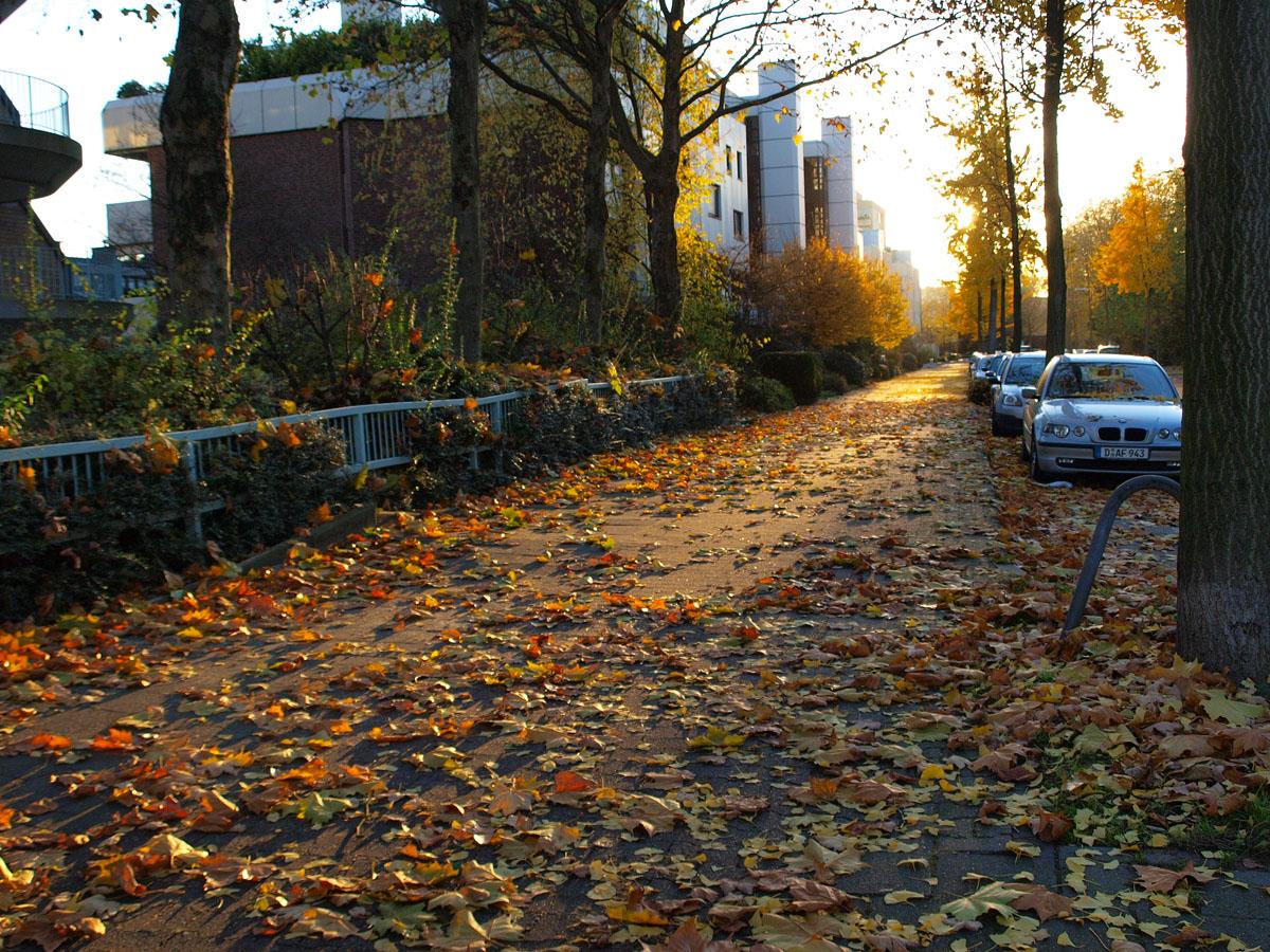 去年の秋は_b0148617_20553510.jpg
