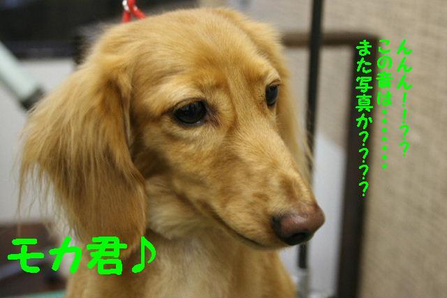b0130018_22323631.jpg