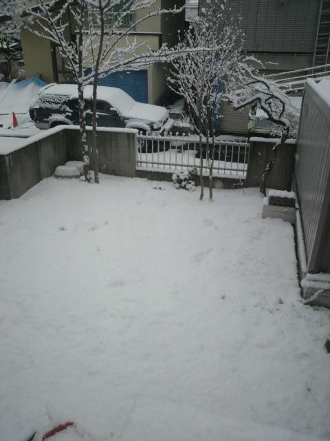 雪 でもまだ_e0173533_1443314.jpg