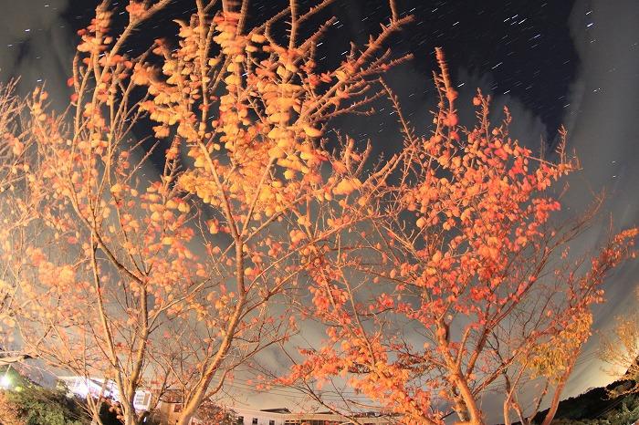 -夜桜- 秋に色づく葉桜は、春よりも燃え盛り☆_a0122544_20203658.jpg