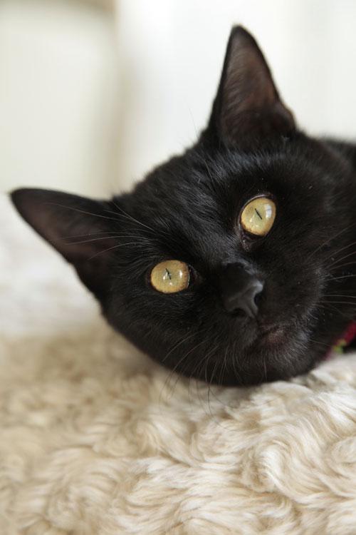 黒猫さんは難しい~_d0084952_0321938.jpg