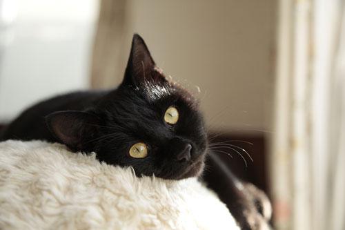 黒猫さんは難しい~_d0084952_0325772.jpg
