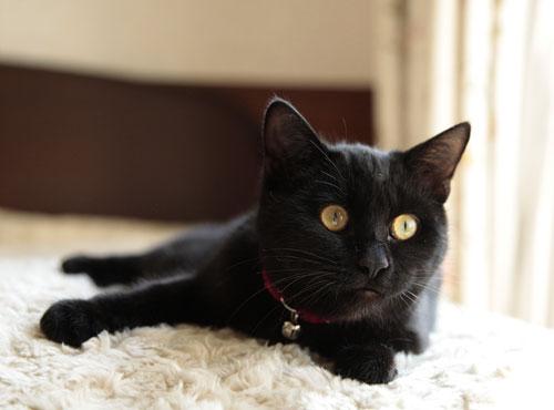 黒猫さんは難しい~_d0084952_0331347.jpg