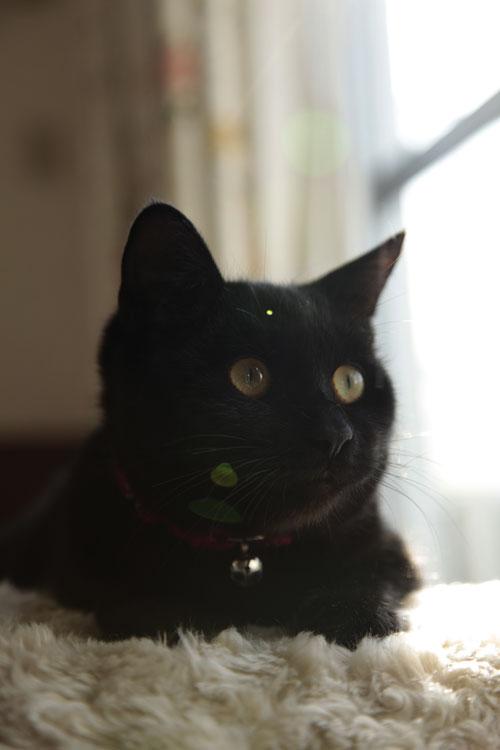黒猫さんは難しい~_d0084952_0335270.jpg