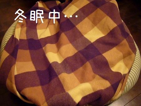 b0069169_1943732.jpg