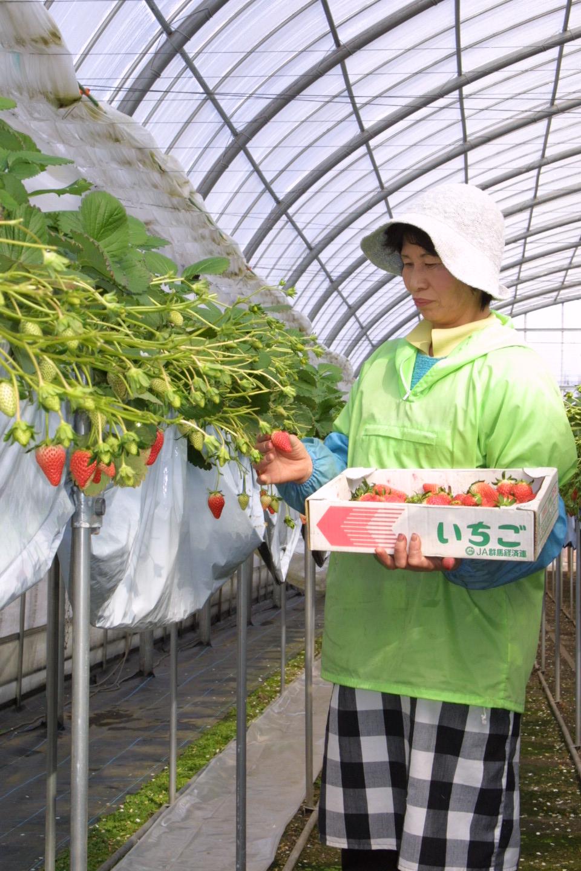 自社農園のいちごが初売りになりました。_e0160569_18284476.jpg