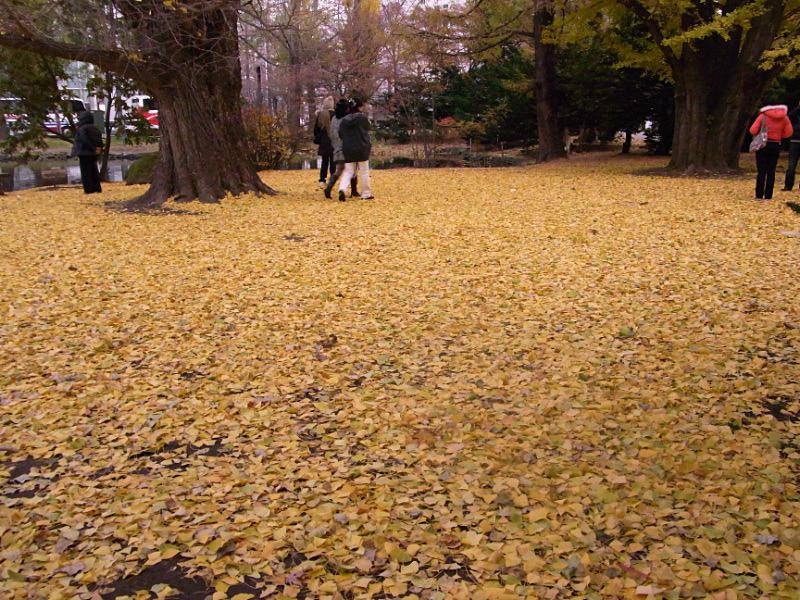 黄色の絨毯_e0100772_21302856.jpg