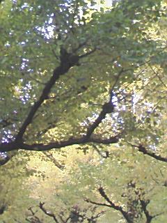 神宮外苑の銀杏並木_e0013178_12562336.jpg