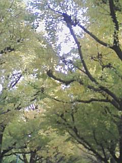 神宮外苑の銀杏並木_e0013178_12562337.jpg
