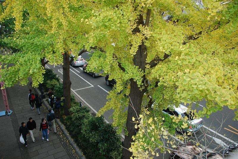鎌倉他(秋)_c0187781_82567.jpg