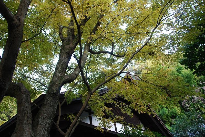 鎌倉他(秋)_c0187781_9424474.jpg