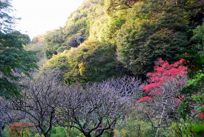 鎌倉他(秋)_c0187781_9445545.jpg