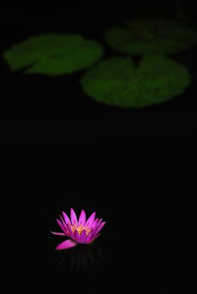 植物公園_c0229485_316104.jpg