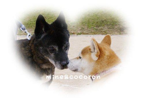 日本犬保存会全国展(京都)_a0053987_22302136.jpg