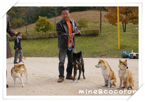日本犬保存会全国展(京都)_a0053987_22315469.jpg