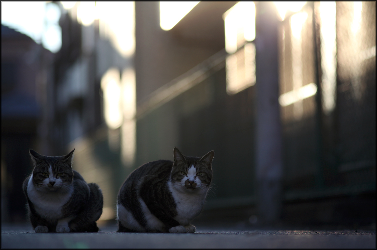 Two cats before sunset_e0022810_22414457.jpg
