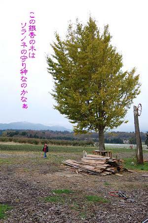 紅葉狩り は たてまえで。。。①_f0177714_1525318.jpg