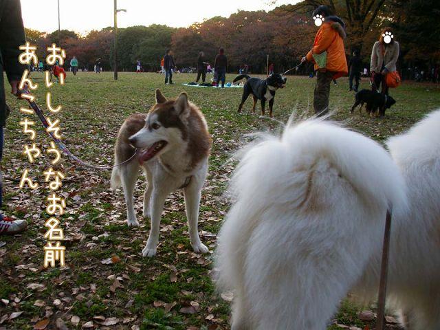 まずは土曜日おっきな公園_c0062832_1835963.jpg