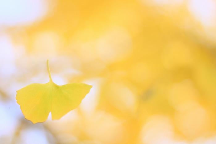まるで美しき蝶のごとく・・・_a0122544_17421799.jpg