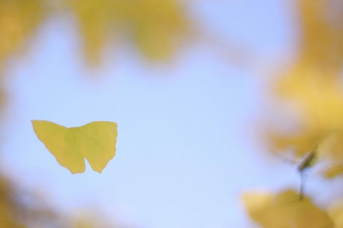 まるで美しき蝶のごとく・・・_a0122544_17463128.jpg