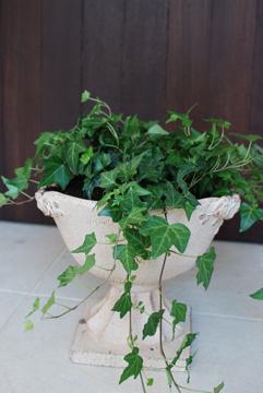 観葉植物_b0151059_750588.jpg