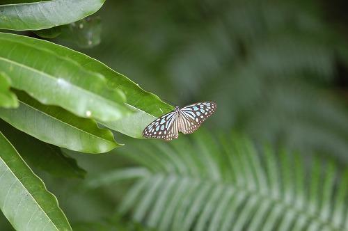 西表島の自然・歴史・文化⑥_c0180460_2403398.jpg