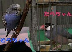 f0196665_2173575.jpg