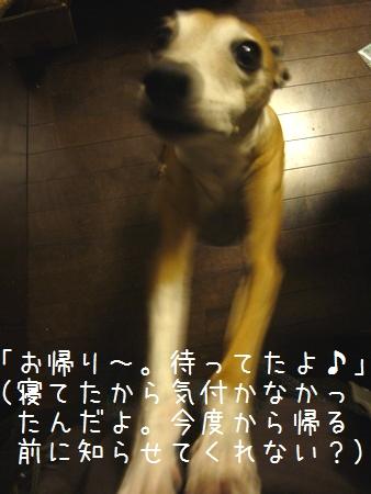 b0069169_113171.jpg