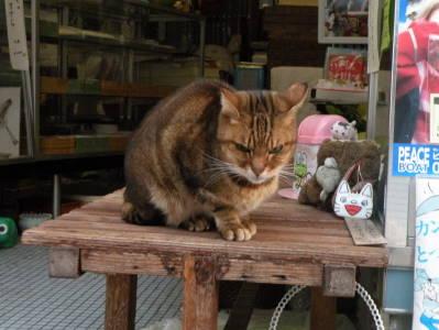 ざぼん売り猫_c0193077_2125069.jpg