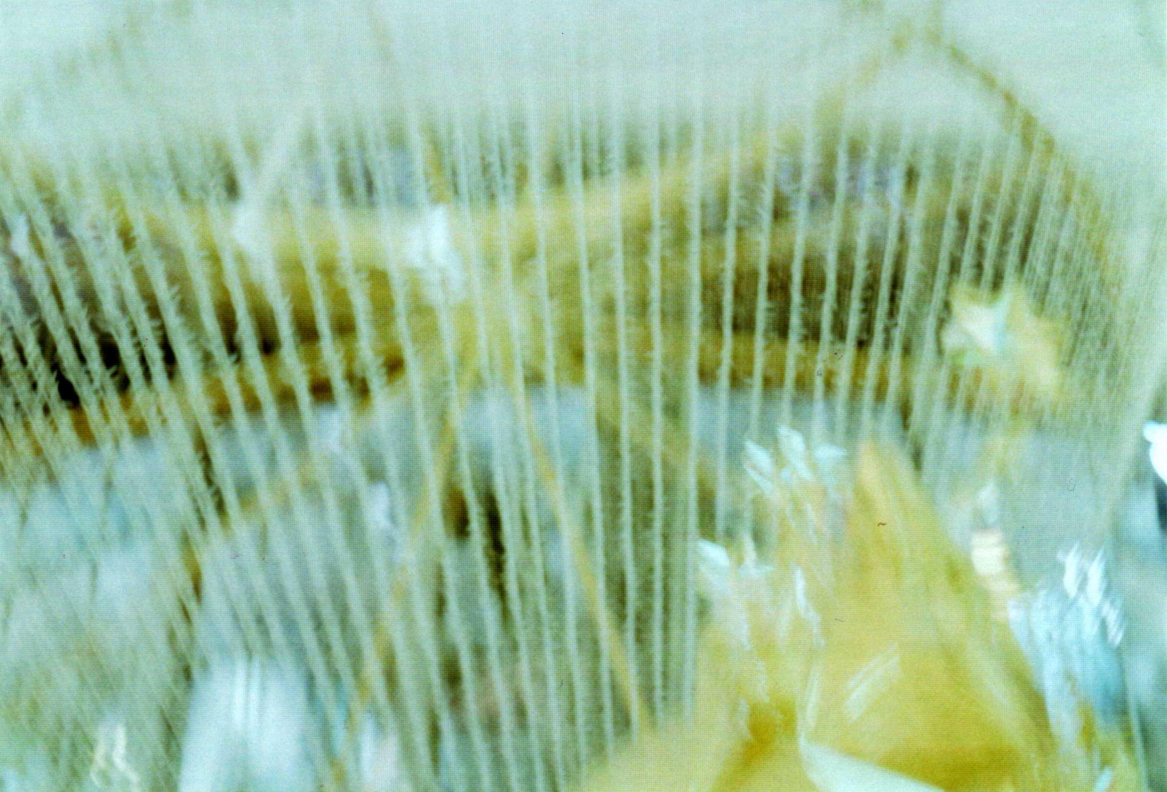 d0084677_20111961.jpg