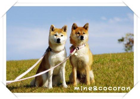 日本犬保存会全国展(京都)_a0053987_14512523.jpg