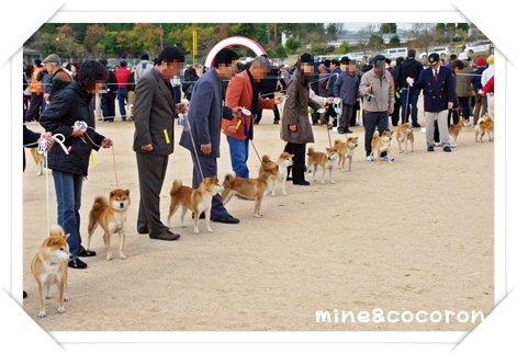 日本犬保存会全国展(京都)_a0053987_2057330.jpg