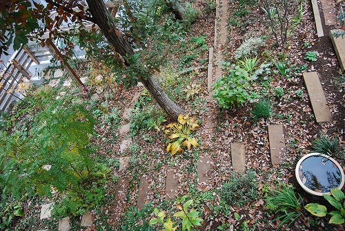 見通しの良い庭に…_c0124100_20393222.jpg