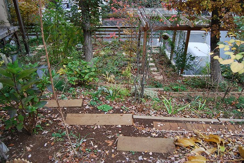 見通しの良い庭に…_c0124100_2040786.jpg