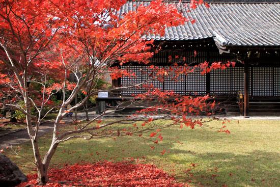 紅葉の盛り 勧修寺(かじゅうじ)_e0048413_21411637.jpg