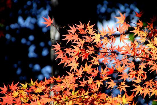 紅葉の盛り 毘沙門堂_e0048413_22361457.jpg
