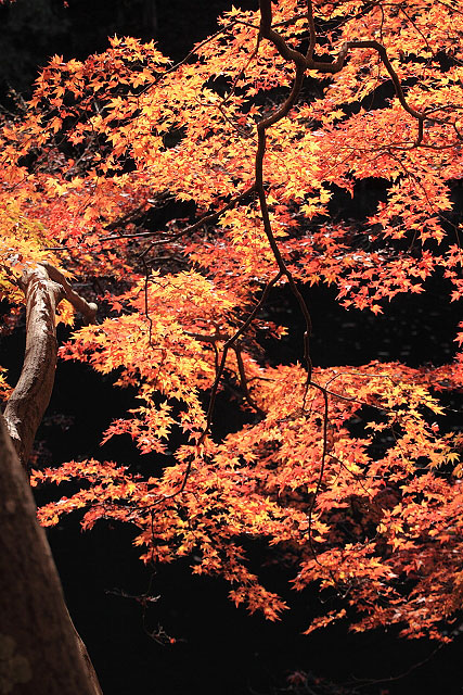鎌北湖の紅葉_d0026817_0513592.jpg