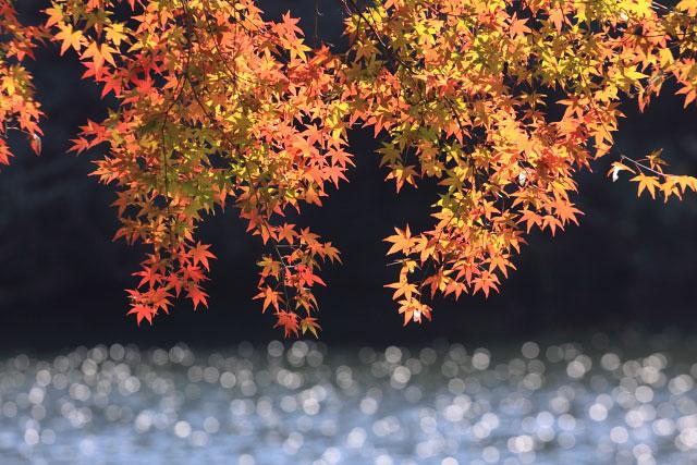 鎌北湖の紅葉_d0026817_105726.jpg