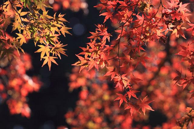 鎌北湖の紅葉_d0026817_1281756.jpg