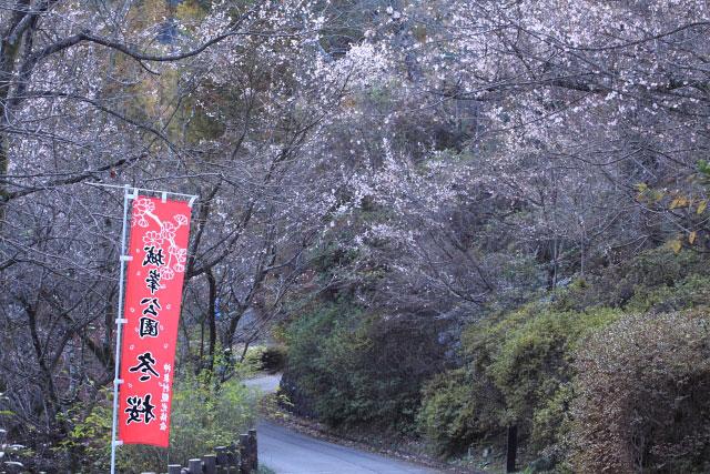 城峰公園・冬桜_d0026817_1311010.jpg