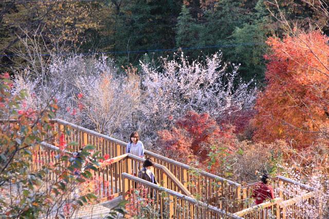 城峰公園・冬桜_d0026817_131397.jpg