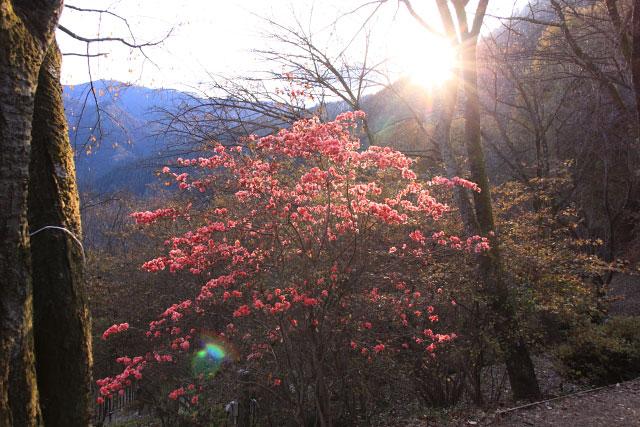 城峰公園・冬桜_d0026817_1322023.jpg