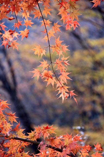 城峰公園・冬桜_d0026817_1331644.jpg